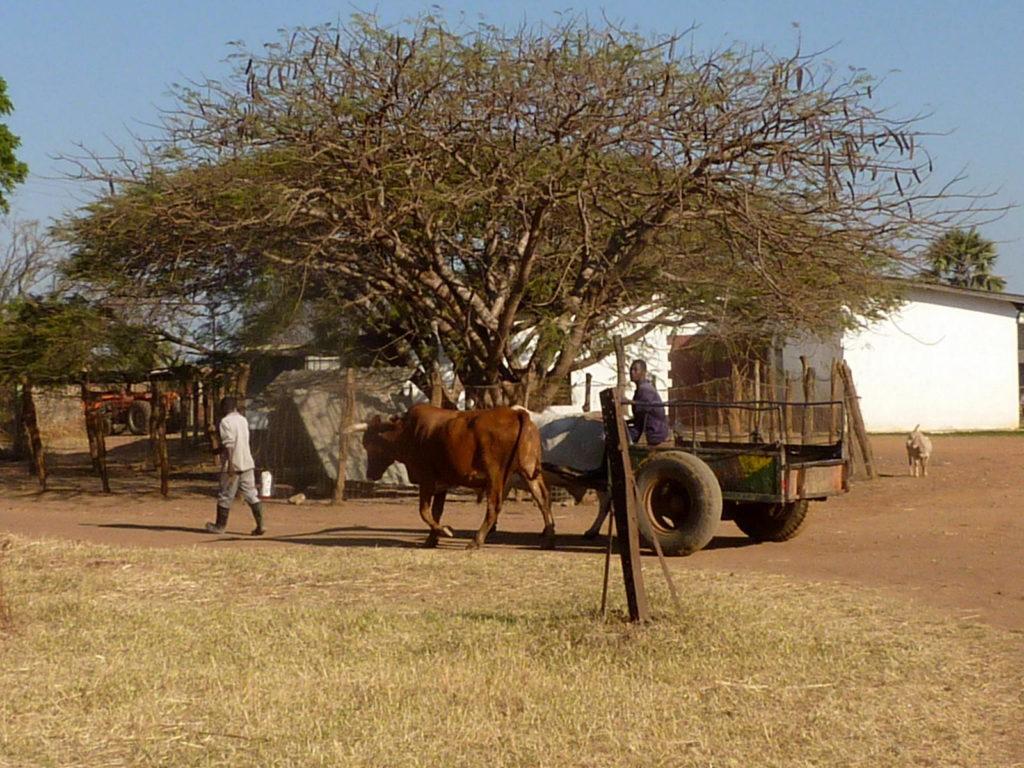 Fringilla Lodge in Sambia