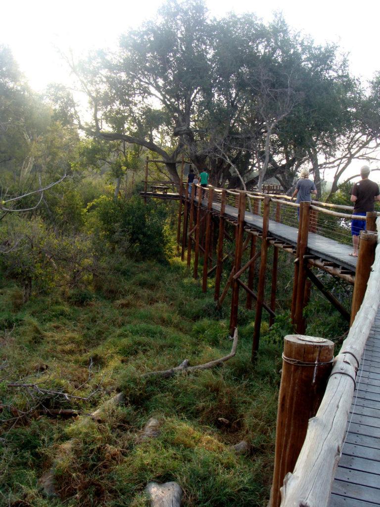 Tree Top Walk - Mapungubwe National Park