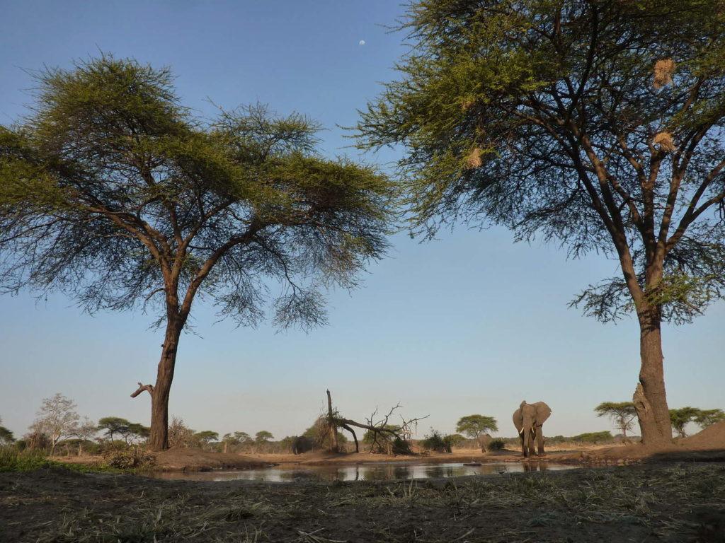Elefanten im Senyati Safari Camp