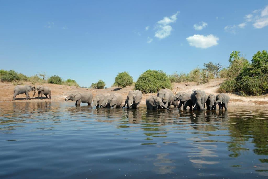 Bootstour im Chobe Nationalpar