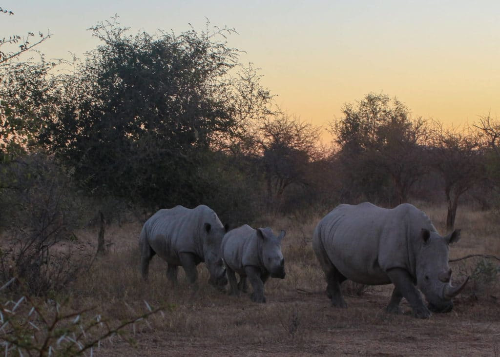 Khama Rhino Sanctuary in Botswana