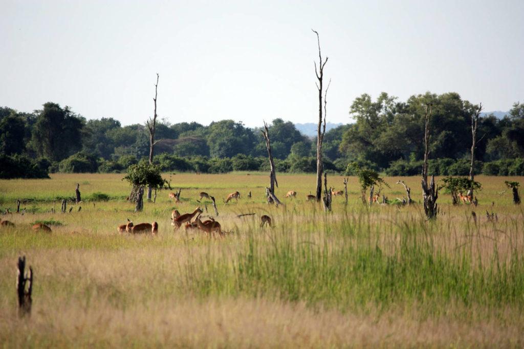 Luambe Nationalpark in Sambia
