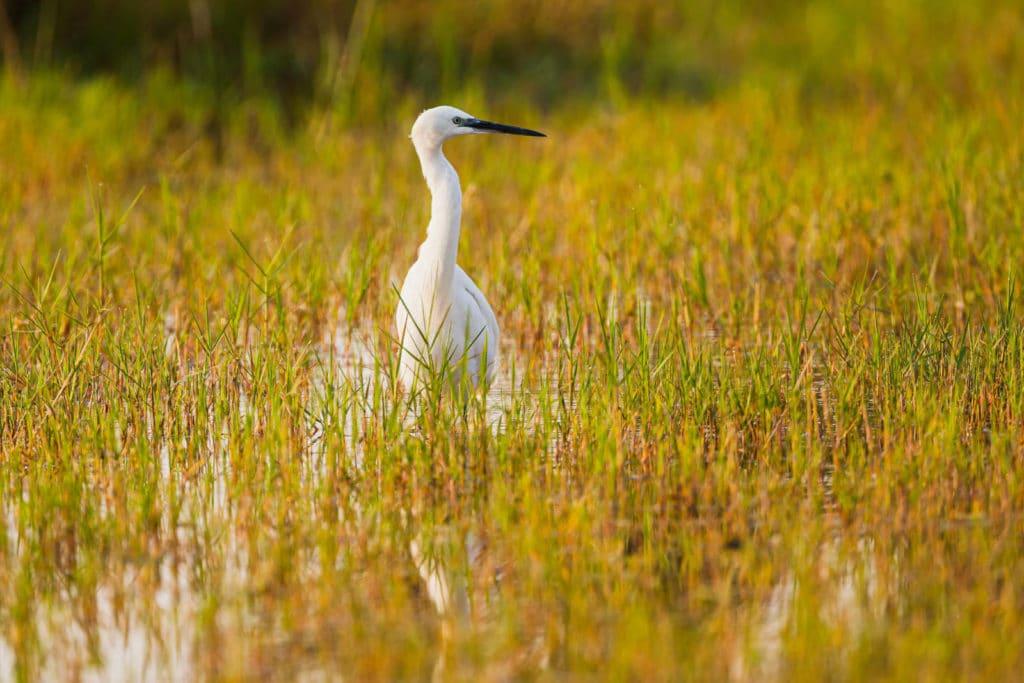 Grässer im Moremi Game Reserve