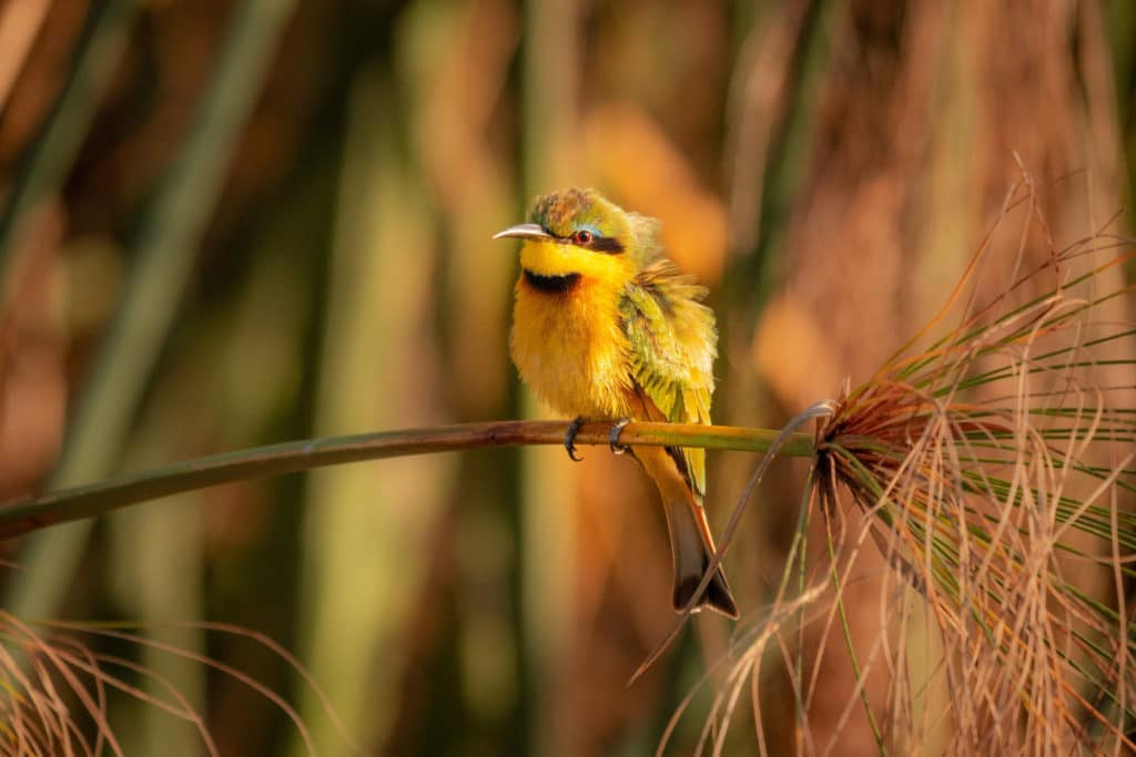 Vögel im Moremi Game Reserve